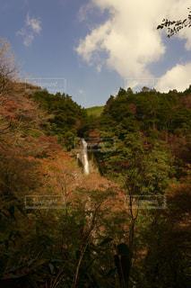 秋,紅葉,森林,屋外,観光地,滝,樹木,熊本,秋色,五家荘,せんだん轟の滝