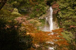 秋,紅葉,屋外,観光地,滝,景観,秋色,五家荘,せんだん轟の滝