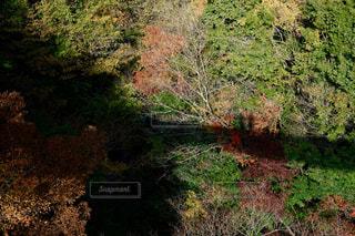 自然,秋,紅葉,カップル,屋外,観光地,シルエット,樹木,新緑,景観,草木,五家荘,茂る