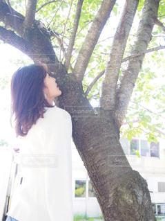 女性,ヘアスタイル,樹木,人物,人