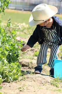畑と息子の写真・画像素材[2096437]