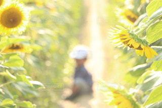 花のクローズアップの写真・画像素材[3554917]