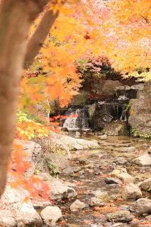 オレンジの木のクローズアップの写真・画像素材[3712218]