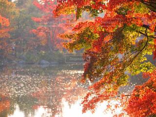 自然,秋,紅葉,森林,水面,景色,秋空