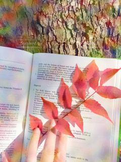 大自然のしおりの写真・画像素材[1576083]