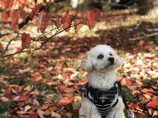 クローズ アップ庭園の犬のの写真・画像素材[1652603]