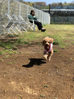 犬の写真・画像素材[2038964]