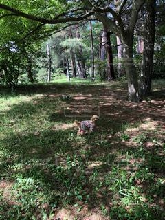 森の真ん中の木の写真・画像素材[2274762]