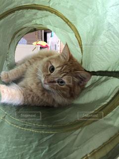 ベッドに横たわる猫の写真・画像素材[2292639]