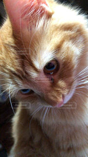 猫のクローズアップの写真・画像素材[2292672]