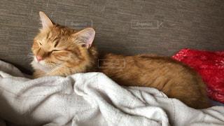 毛布の上に横たわる猫の写真・画像素材[2292684]