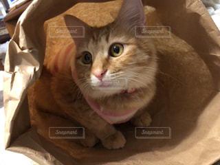 毛布の上に座っている猫の写真・画像素材[2292686]