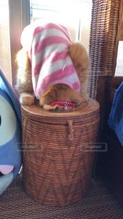 かごの中に座っている猫の写真・画像素材[2292688]