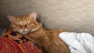 ベッドに横たわるオレンジ色の猫の写真・画像素材[2292727]