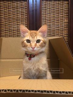 窓の前に座っている猫の写真・画像素材[2292743]
