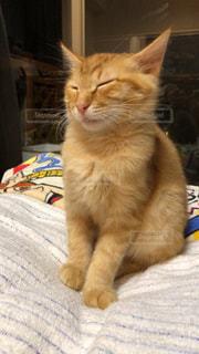 ベッドに座っている猫の写真・画像素材[2292745]