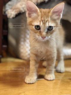 木製のテーブルの上に座っている猫の写真・画像素材[2292751]