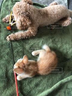 地面に横たわる犬の写真・画像素材[2292769]