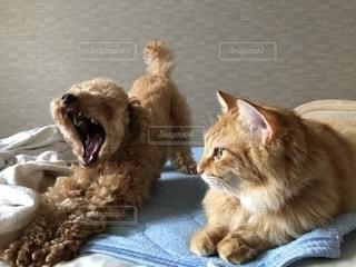 ぬいぐるみの上に座っている猫の写真・画像素材[2293559]