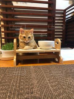 椅子に座っている猫の写真・画像素材[2293590]