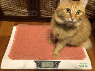 テーブルの上に座っている猫の写真・画像素材[2322253]