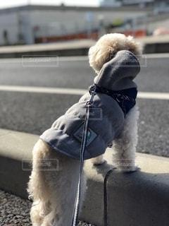 衣装を着た犬の写真・画像素材[2546829]