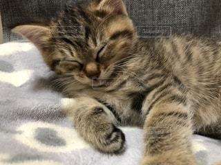 眠っている猫をクローズアップするの写真・画像素材[2722586]