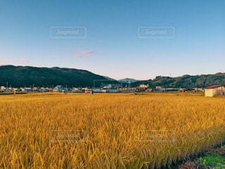 風景,空,田舎,田んぼ