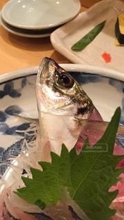 魚,生きてる,秋の味覚,動いてる,秋の味,秋魚
