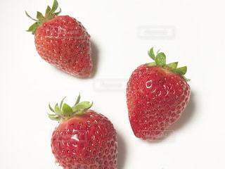 食べ物,かわいい,いちご,苺,フルーツ,果物,果実,おいしい,畑,イチゴ