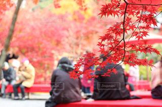 紅葉  京都の写真・画像素材[1647715]