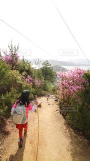山登りの写真・画像素材[2258950]