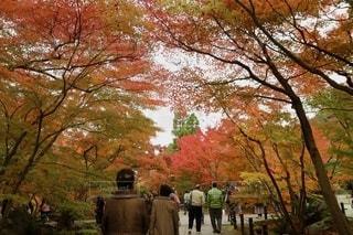 もみじの写真・画像素材[2623603]
