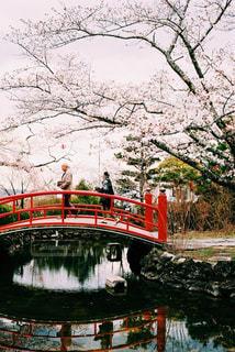 自然,桜,カラフル,鮮やか,お花見,開花