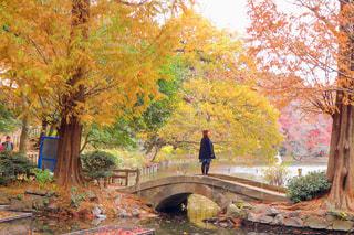 風景,公園,秋,紅葉,秋空