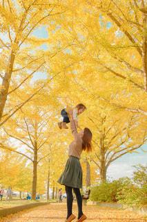 銀杏並木で高い高いの写真・画像素材[1609933]