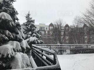 雪,白,アメリカ,クリスマス,シカゴ,クリスマスツリー,ホワイト,粉雪
