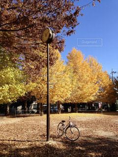空,公園,秋,紅葉,自転車,青空,時計,イチョウ,銀杏,秋空