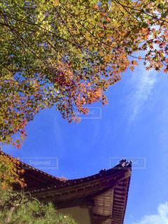 空,秋,紅葉,雲,もみじ,秋空,瓦屋根