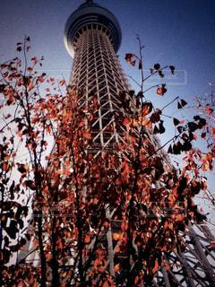 空,建物,秋,紅葉,スカイツリー,秋空