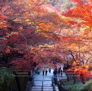 秋,清水寺,絶景,紅葉,木,屋外,京都,階段,景色,観光