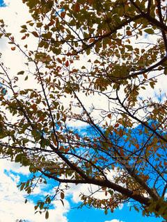 秋,紅葉,秋晴れ