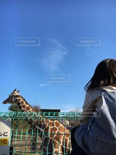 秋空と動物園の写真・画像素材[1525607]