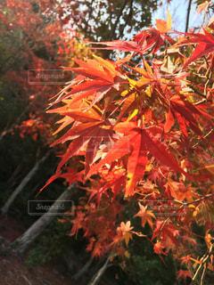 紅葉の季節の写真・画像素材[1625877]