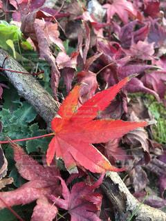 紅葉の季節の写真・画像素材[1625897]