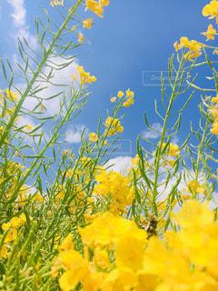 黄色い花の写真・画像素材[2448713]