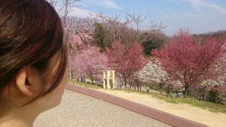 女性,公園,花,春,桜,ピンク,晴れ,散歩,お花見