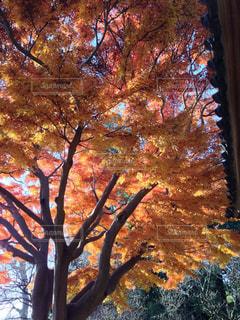 樹木,日中