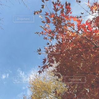 紅葉,秋空,景観,草木,フォトジェニック