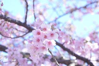 風景,花,春,桜,お花見
